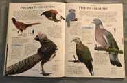 DK Encyclopedia Of Animals (129)
