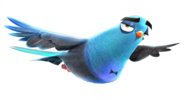 Pigeon - Lance Sterling