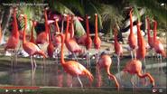 Tampa Lowry Park Zoo Flamingos