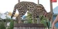 Columbus Zoo Serval