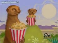 MGPaM Meerkats