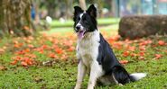Ten-things-you-didn't-know-about-Border-collies-