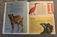 The Dictionary of Ordinary Extraordinary Animals (22)