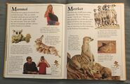 The Kingfisher First Animal Encyclopedia (43)