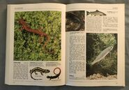 The Kingfisher Illustrated Encyclopedia of Animals (136)