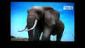 UTAUC African Elephant 2