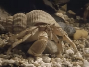 Amazing-animals-activity-center-hermit-crab