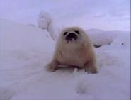 Baby Einstein Harp Seal