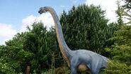 Brachiosaurus antithorax