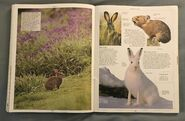 DK Encyclopedia Of Animals (134)