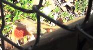 Lizard in miami zoo