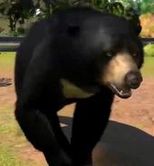 Sun-bear-zootycoon3
