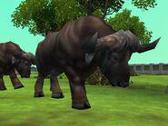 Zt2-africanbuffalo