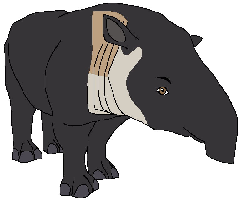 Barry the Baird's Tapir