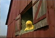 Big Bird sleeping in the barn