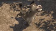Donkey Sing