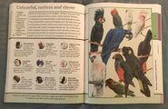 Fantastic World of Animals (69)