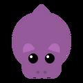 Hippopira