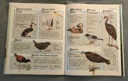 Macmillan Animal Encyclopedia for Children (35)