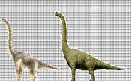 Male and Female Brachiosauruses