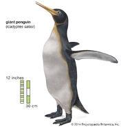 New Zeland Giant Penguin