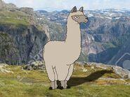 Rileys Adventures Huacaya Alpaca