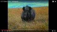 Sea Turtles Black Rhinoceroses Could Be History