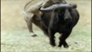 AFO Buffalo