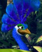 Azul the Peacock