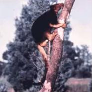 Blinky bills ghost cave - tree kangaroo