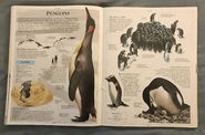 DK Encyclopedia Of Animals (128)