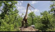 Dinosaurs Alive! Quetzalcoatlus