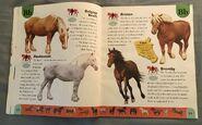 Horse Dictionary (3)