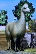 Llama ZTX