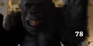 Zoo 2015 Gorilla