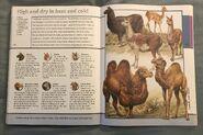 Fantastic World of Animals (83)