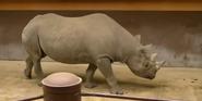 Great Plains Zoo Rhino
