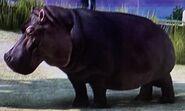 Hippopotamus ZTX