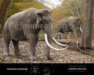 Mammuthus meridionalis by rom u-d618gbx