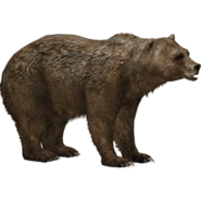The Grizzly