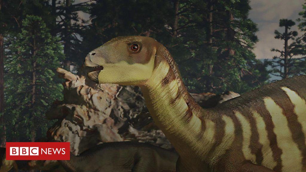 Galleonosaurus