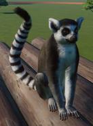 Lemur, Ring-Tailed (Planet Zoo)