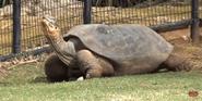 Oklahoma City Zoo Tortoise