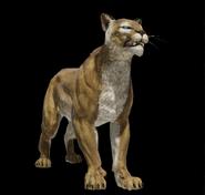 Prairie Puma
