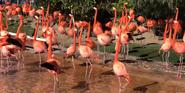 SeaWorld Flamingos