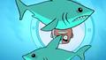 TTG Sharks