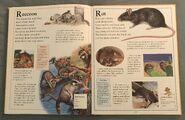 The Kingfisher First Animal Encyclopedia (56)