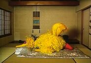 Big Bird sleeps on a futon in Japan