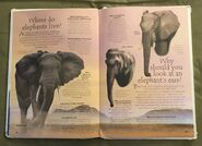 Endangered Animals (Over 100 Questions and Answers to Things You Want to Know) (10)