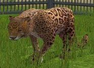 Jaguar-wildlife-park-2